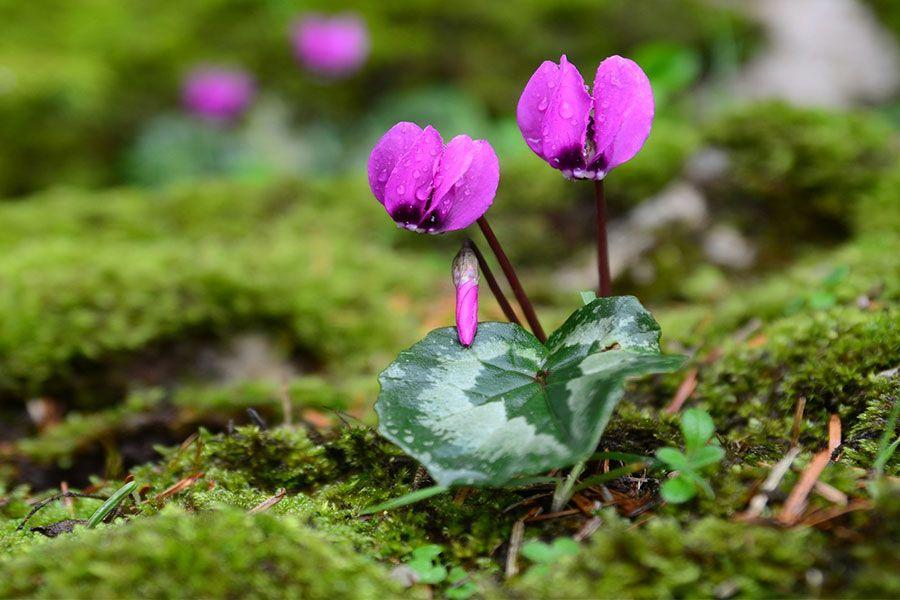 Botanik Yaşam ve Endemik Bitki Örtüsü İzleme